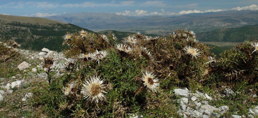 Su Monte Longagna con Ethnobrain