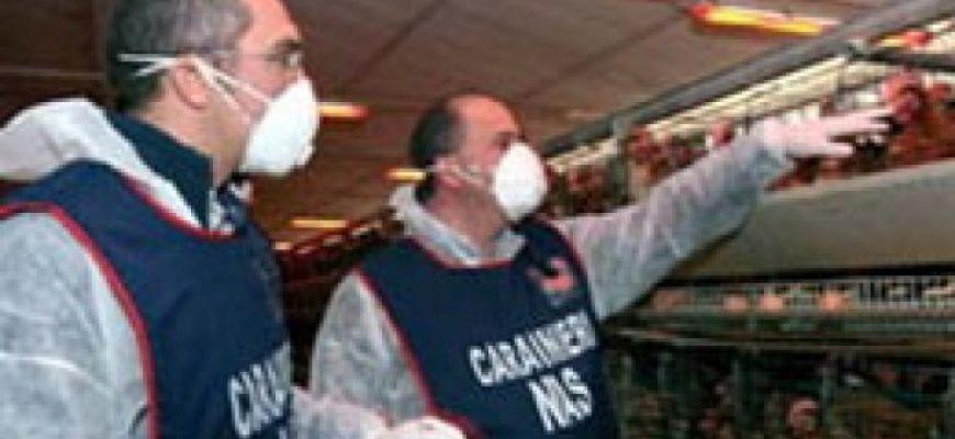 Attività commerciale sospesa ad Avezzano. Trovati alimenti etnici in cattivo stato