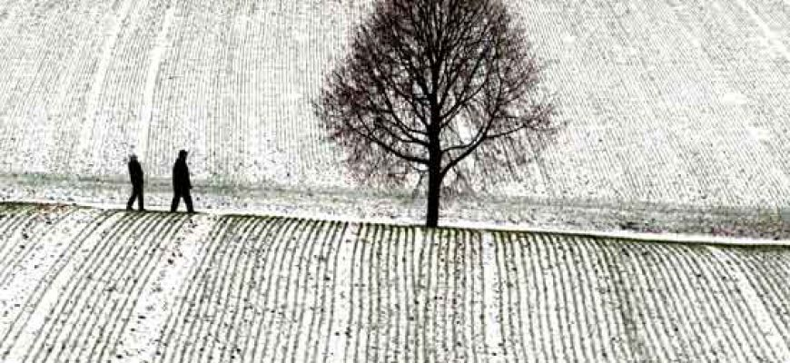 Neve sui campi e l'agricoltura conta i danni