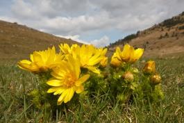 Scoperta una nuova rarissima specie vegetale nel territorio del Parco Regionale del Sirente Velino
