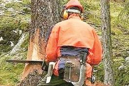 Catalano, omicida anche di alberi?