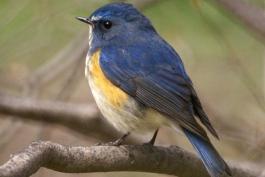 Fauna: nel Parco spunta il Codazurro