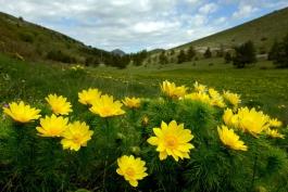 La natura come ambiente di apprendimento fra Gioia e il Parco