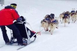 Ovindoli col cuore di Balto: lo sport dei cani da slitta diventa uno show marsicano