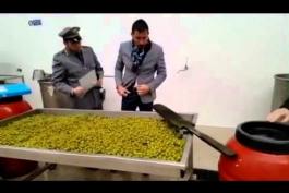 Olive verniciate, lo scandalo si allarga alla nostra zona