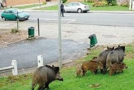 Danni da fauna selvatica raggiunto il punto di non ritorno. Molte aziende hanno chiuso l'attività